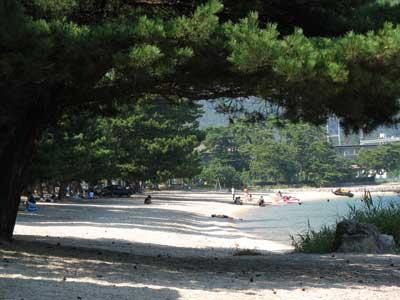 松間より眺めた近江舞子雄松浜と多くのバーベキュー客
