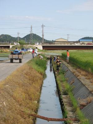 鯰が遡上する滋賀県湖東平野の水路
