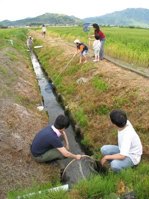 滋賀県湖東平野の水路で鯰獲りの網を仕掛ける鯰会の面々