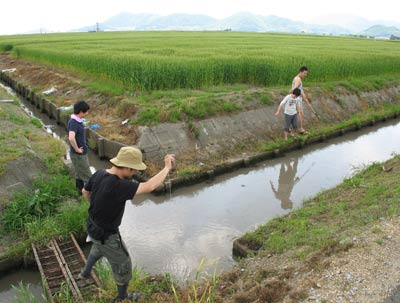 滋賀県湖東平野の水路で鯰獲りの仕掛けを調べる鯰会の面々と広大な麦畑