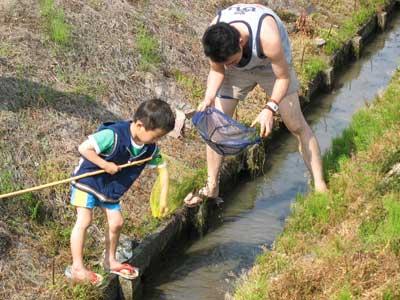 滋賀県湖東平野の水路で小魚獲りに挑む鯰会参加者
