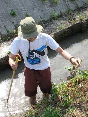 滋賀県湖東平野の水路で蛇を手掴みする鯰会参加者