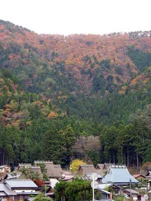 錦秋の山を背後に茅葺屋根の古民家が並ぶ、京都府南丹市美山町の「かやぶきの里」北村集落