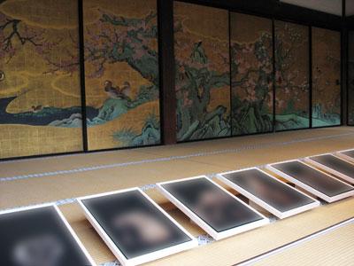 大覚寺宸殿「紅梅の間」の畳上、狩野山楽の「紅白梅図」前に展示された来田猛の写真作品