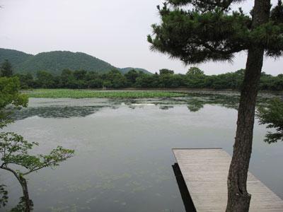 大覚寺本堂「五大堂」裏より見た嵯峨の名勝「大沢池」とその中に仕込まれたアーティスト作品