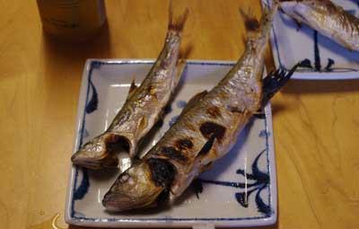 滋賀県湖東の川で行われた網会終了後に獲物の雄雌のハスで作った塩焼き
