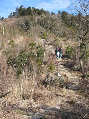 以前の火災により木が少ない繖山から安土山へ続く急な尾根道を下る城会参加者