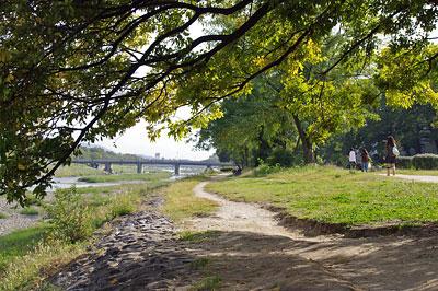 太古の「道の始まり」に似た、人や自転車の往来で自然と芝生上に生じた、京都・賀茂川(鴨川)河畔の小道