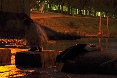 月会「9月12日の京都左京区賀茂川(鴨川)の満月,1260万画素300mm望遠レンズ等倍画像,中秋,十五夜,観月,お月見,満月」