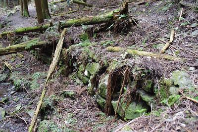 如意ヶ嶽山中の沢筋にて発見した古い石垣
