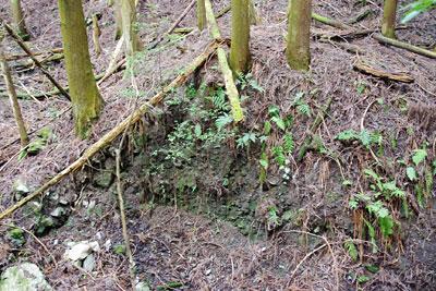 京都市東部の如意ヶ嶽(大文字山)山中で見つけた、謎の土塁関門の断面