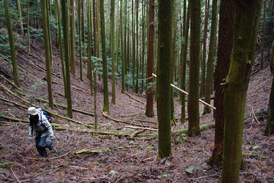 京都市東部の如意ヶ嶽(大文字山)山中の、道のない広谷をゆく参加者