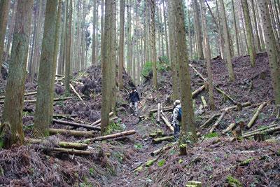 京都市東部の如意ヶ嶽(大文字山)山中にある如意寺正寶院推定地の大土壇と古道の切通し