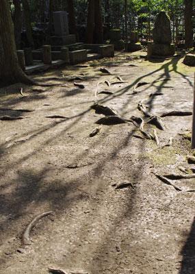 京都市東部の山中にある「若王子同志社墓地」の新島襄墓所前の平地に浮き出る木の根