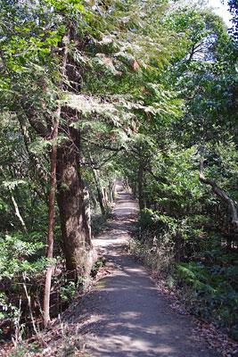 京都市東部の東山山中にある、中世の大日山城との関連も窺われる不自然な尾根道