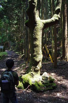 峠会「寒谷越の分岐の木と石祭祀,岩倉と大原を結ぶ古道」