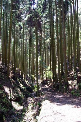 峠会「植林地の谷中・沢沿いに続く寒谷越,岩倉と大原を結ぶ古道」