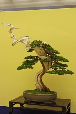 「見返り美人」の様な真柏盆栽,第32回日本盆栽大観展,BONSAI Exhibition,kyoto,京都岡崎みやこめっせにて
