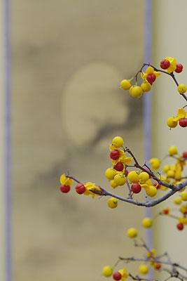 ツルウメモドキ(蔓梅擬)の盆栽の枝先と背後の掛軸画,第32回日本盆栽大観展,BONSAI Exhibition,kyoto,京都岡崎みやこめっせにて」