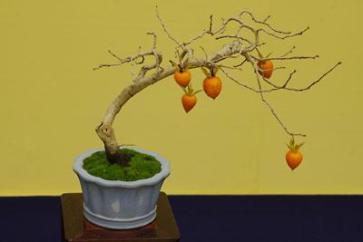 柿の実がなる盆栽小品,第32回日本盆栽大観展,BONSAI Exhibition,kyoto,京都岡崎みやこめっせにて