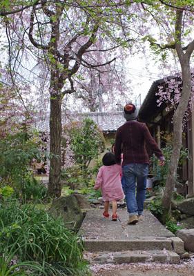 催事(本人)「上賀茂,花見,社家の庭園の枝垂桜」