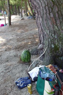 滋賀県琵琶湖西部・近江舞子雄松浜の松の大樹下に置かれた、湖会参加者差し入れの大西瓜