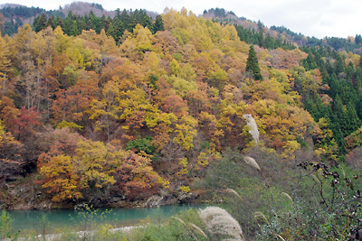山会「石川県,白山麓,白峰,手取川上流の河岸の紅葉・黄葉」