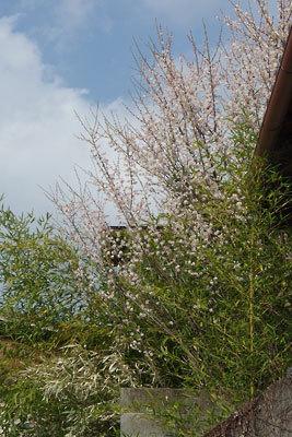 手工「庭,坪庭,家庭菜園,境界,竹垣作り,竹垣受け,掛け具」