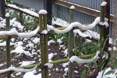 2016年3月1日の降雪で縄のように雪が載った、京都市街東部の町家奥庭の竹垣
