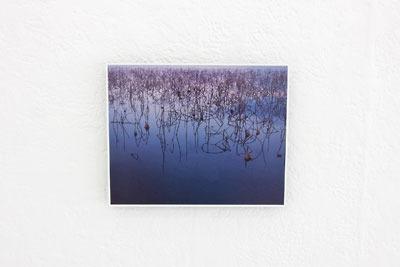 京都蹴上のギャラリー「アートスペース虹」で開かれた来田猛個展「光の輪郭」で展示された、琵琶湖内湖の水面に群集する蓮茎ある作品