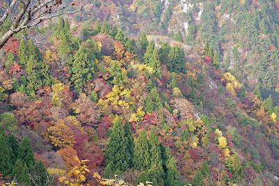 滋賀県西部・比良山脈の堂満岳と釈迦岳間の斜面を覆う、鮮やかな秋の紅黄葉。2010年11月7日撮影