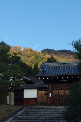 京都市街東郊・霊巌寺の寺門奥に覗く、明るい山の黄葉