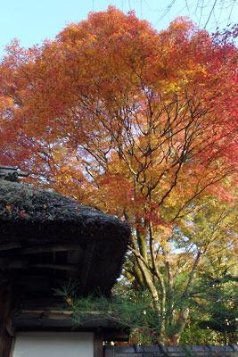 京都市街東郊・安楽寺山門の紅葉