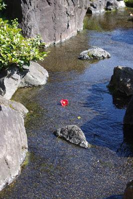 京都市街南部にある城南宮の有料神苑内の小川(曲水?)に落ちた一輪の椿