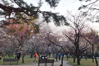 夕方の京都御苑(御所)の梅園