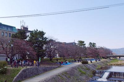 まだ花のない桜並木に大勢の花見客が展開する、京都出町柳駅付近の賀茂川(鴨川)河畔