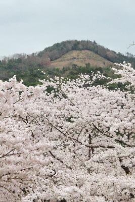 京都市街東部の満開の桜の上に覗く大文字山。2017年4月10日撮影