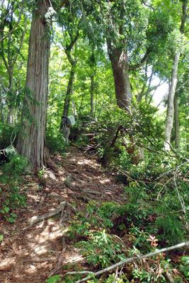 山会「京都北山廃村八丁行,品谷山への尾根道への登り」