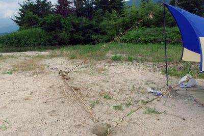 滋賀県琵琶湖西岸の砂浜湖岸で、持主が忘れた日除けタープの張綱を、現地に生えるツルヨシで代用し、石で固定した竹をアンカーとしたタープ側面の様子