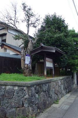 福井平野東部・旧松岡城主郭跡地にある松岡城唯一の遺構「御館の椿」