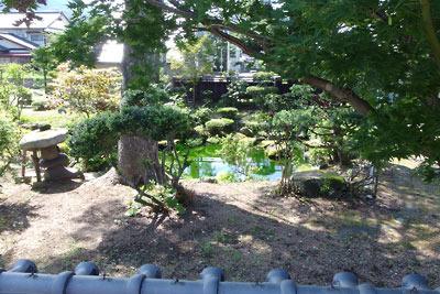福井県東部の内陸都市・大野市街の御清水近くの屋敷内にある、湧水とみられる透明度の高い庭池