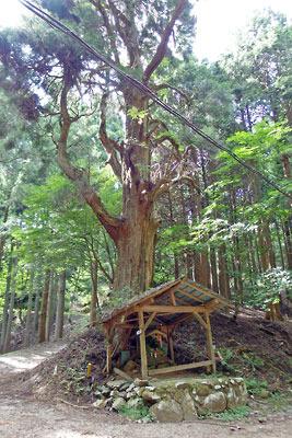 京都市街北部の高所集落「芹生」東方の旧花脊峠の大木と祠