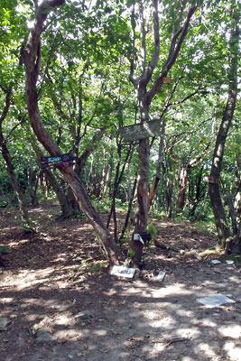 京都市街北部の高所集落「芹生」東方の旧花背峠と花脊峠の間にある天狗杉山頂