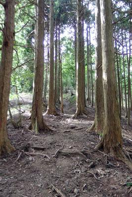 京都市街北部の高所集落「芹生」東方の、旧花背峠裏の尾根上に発見した芹生古道