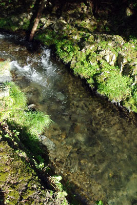 京都市街北部の高所集落「芹生」奥地の灰屋川源流部の清澄な沢水