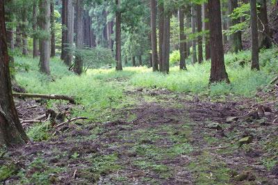 京都市街北部の高所集落「芹生」奥の灰屋川支流谷の林道上で見た動くもの