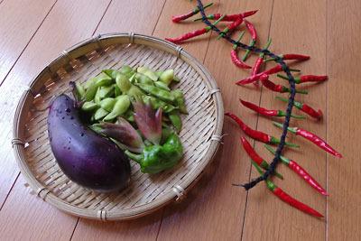 暑さで不作の菜園収穫(茄子・枝豆・茗荷・ピーマン・鷹の爪)