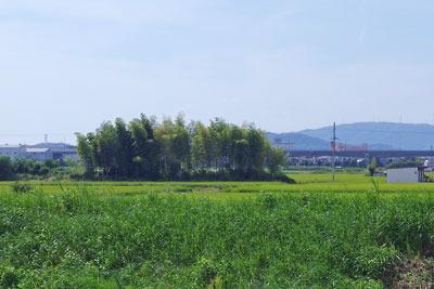 京都市街南郊・旧巨椋池「大池堤」跡を踏襲した排水路(古川)堤防路の西に見えた、干拓地内の堤状の高まり
