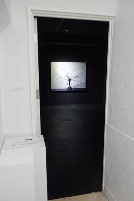 大阪中心部のギャラリー「白(HAKU)」で開かれた、杉田一弥と来田猛(ころだ・たける)の生け花と写真のコラボ展「FLOWERS 2017」導入部の、1階展示室の暗闇に浮かぶ写真作品