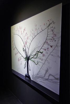 大阪中心部のギャラリー「白(HAKU)」で開かれた、杉田一弥と来田猛(ころだ・たける)の生け花と写真のコラボ展「FLOWERS 2017」で展示される、繊細で美しい大型写真作品